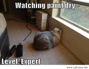 watching-paint-dry